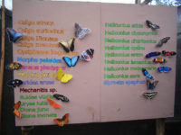 Mindo Butterfly Farm, El Monte Sustainable Lodge, Mindo Ecuador